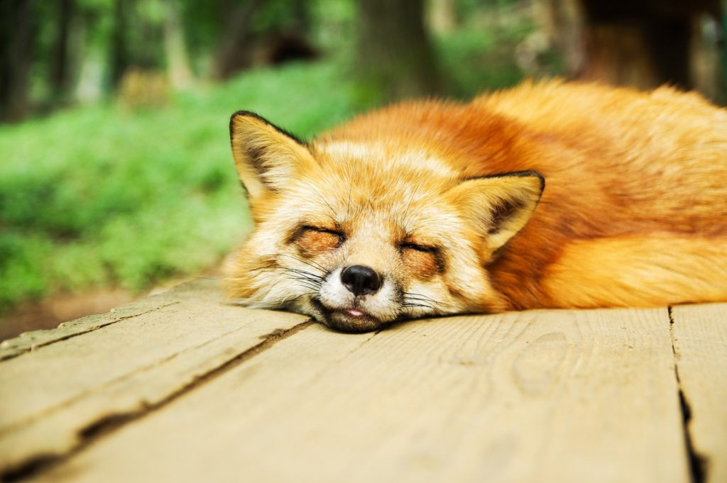 睡眠をとって肥満予防