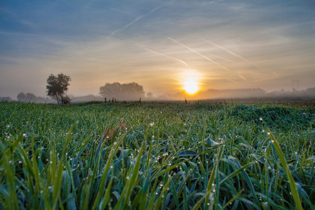 睡眠の質を高める朝の光