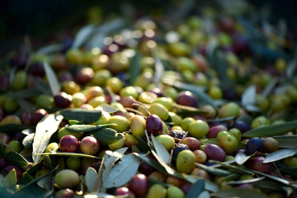 オメガ9脂肪酸が豊富なオリーブ